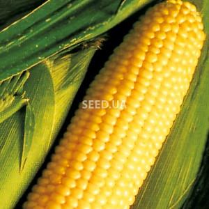 Кукуруза сахарная (желтая)